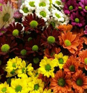Букет цветов,букет хризантем , оптом,день Матери