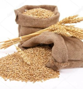 Зерно,Пшеница доставка бесплатно