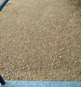 Пшеница-5000р