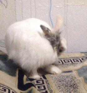 Кролик + клетка