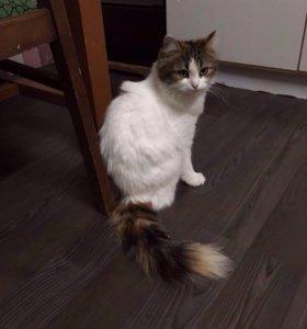 Кошка-Макарешка
