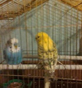 Папугаи мести с клетко и всеми прнадлежинастими