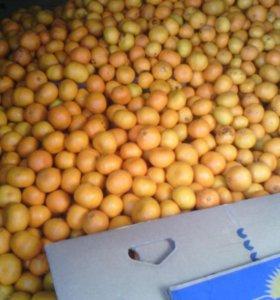 Вкусные мандарины из Абхазии.