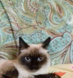 Очень ласковая кошка