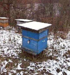 Пчёлы и улья, 2-а костюма, все приборы и вощина!!