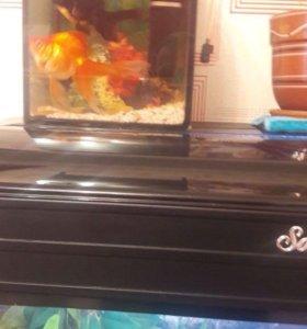 Золотая рыбка и телескоп с аквариумом