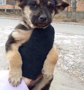 Чудесный щенок в добрые руки