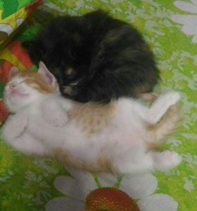 Котята 1 мальчик 1 девочка