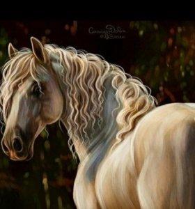 Картины по номерам Лошадь кони