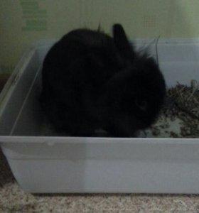 Отдам декоративного кролика