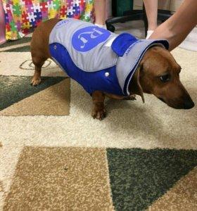 Одежда для собаки зима/осень