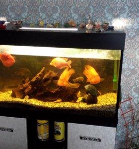 аквариум со всем содержимым