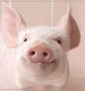Мясо, свинина