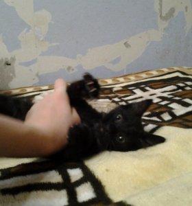 Котята ищут добрых хозяев! Ласковые, домашние!