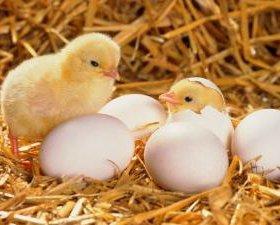 инкубатор на 360, 720, 1080 шт.яйца