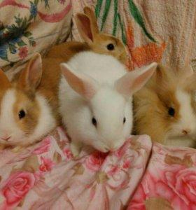 Декоративные кролики )) породистые .