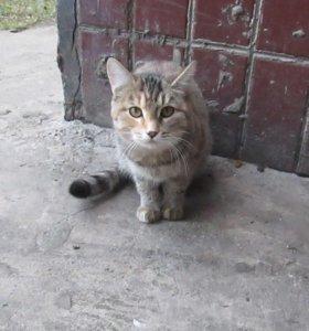 Бездомная молоденькая кошечка