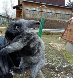 Кролики(самки и самцы)