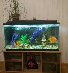 Аквариум с рыбками, тумбой