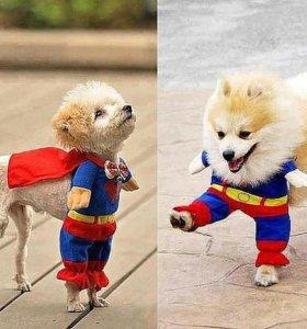Погуляю с вашей собачкой