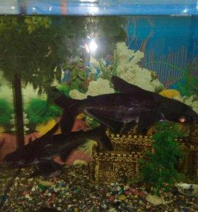 Аквариум с рыбками и все что идёт к нему