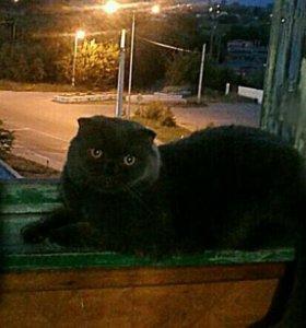 Нужен котик на вязку