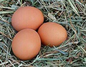 Куриные яйца 1 категории
