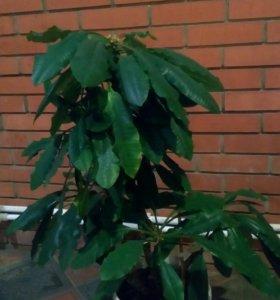 Компания растения