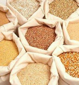 Пшеница,овес,ячмень