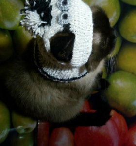Тёплая шапочка - шлем для тойчика или сфинкса