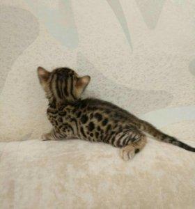 Коты в нижнекамске