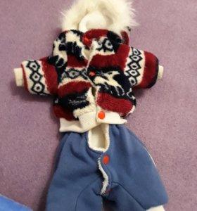 Зимний костюм для собаки покупалось на ёрка торг