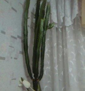 Цветок-кактус. С горшком. Самовывоз