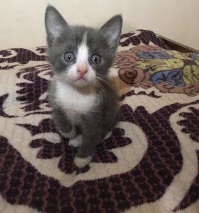 🐾Весёлый котик 🐾