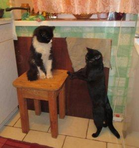 кот, раньше был домашний