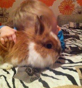 Декоративный карликовый кролик