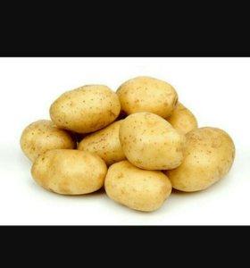Очень вкусный картофель 350руб за 12л ведро