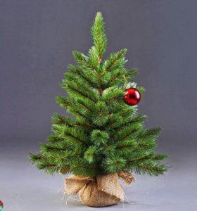 натуральная елка c бесплатной доставкой