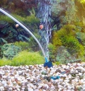 Улитки домашнии аквариумные водные.