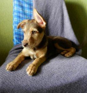Зеленоглазый щенок в добрые руки
