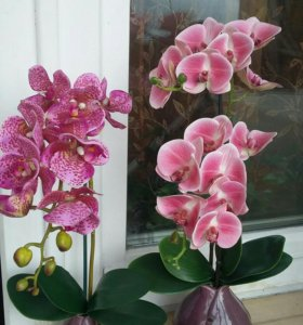 Композиция с тигровой орхидеей