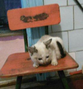 Кот от кошки крысоловки