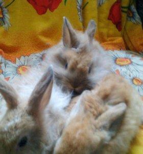 Декаративные кролики