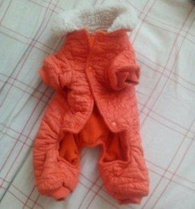 Зимний и демисезонный костюм для собак