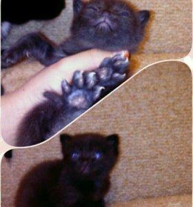 Отдам котяток :)