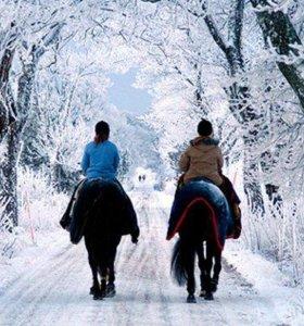 прогулка на лошади верхом