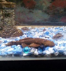 обмен на аквариумные растения;