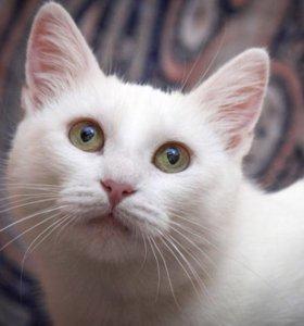 Белая кошка Донна 1 год