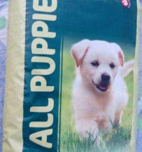для собак - All Puppies