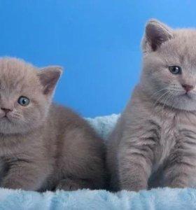 Котята малыши!!!